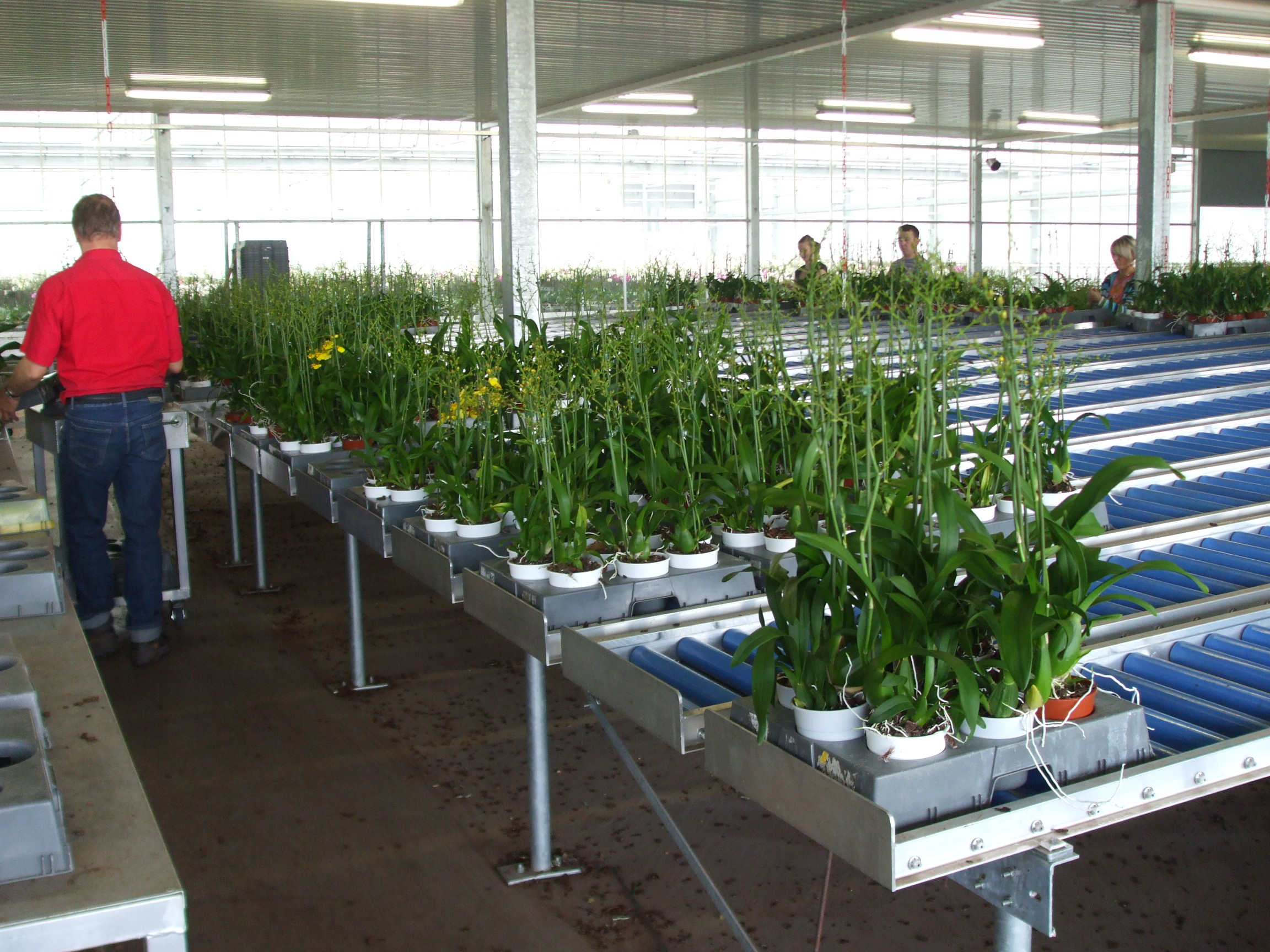 Plant Delivery Systems for Greenhouse Automation
