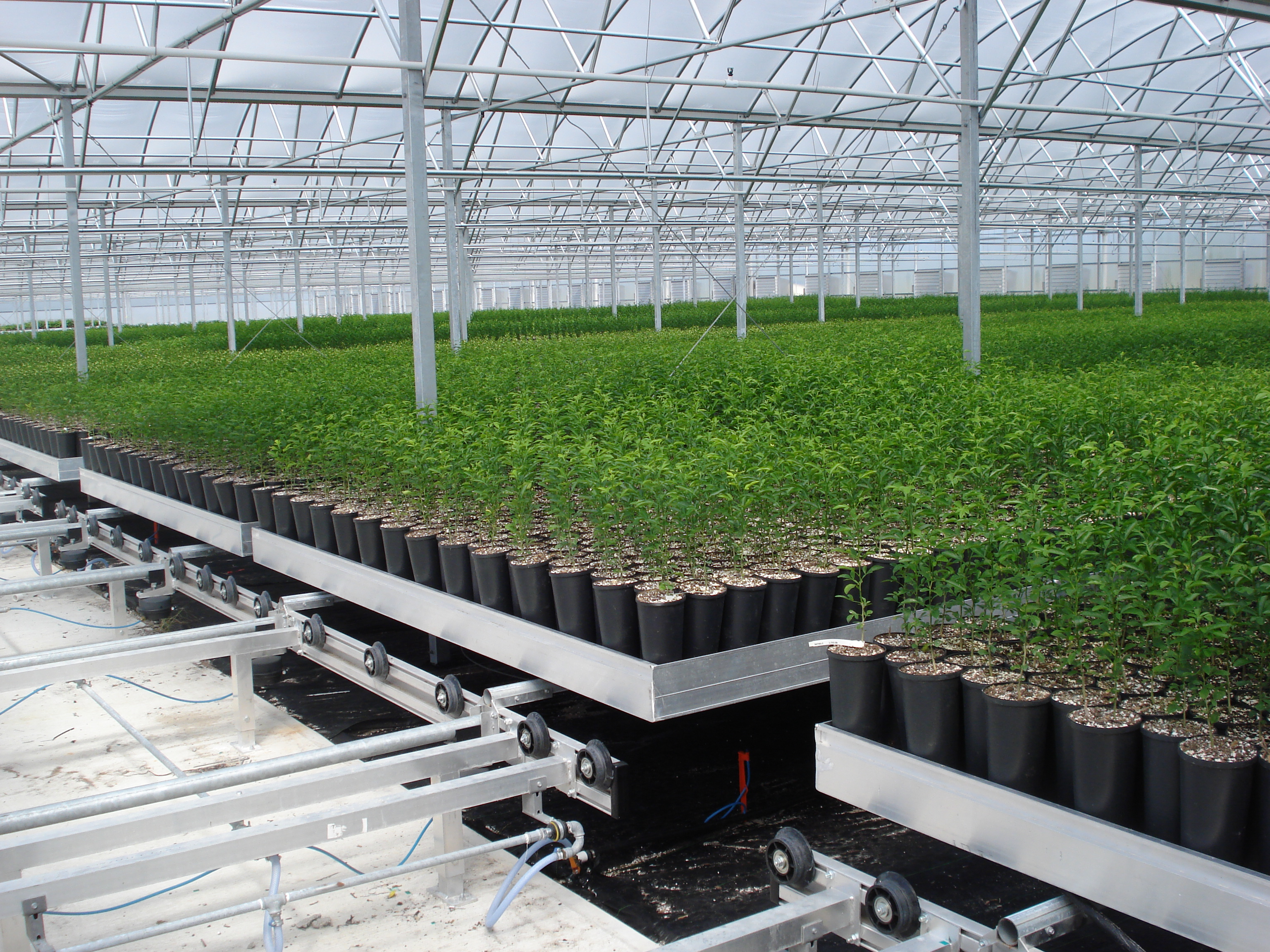 Moving Tables - Greenhouse Expansion Projects - TAVA Systems