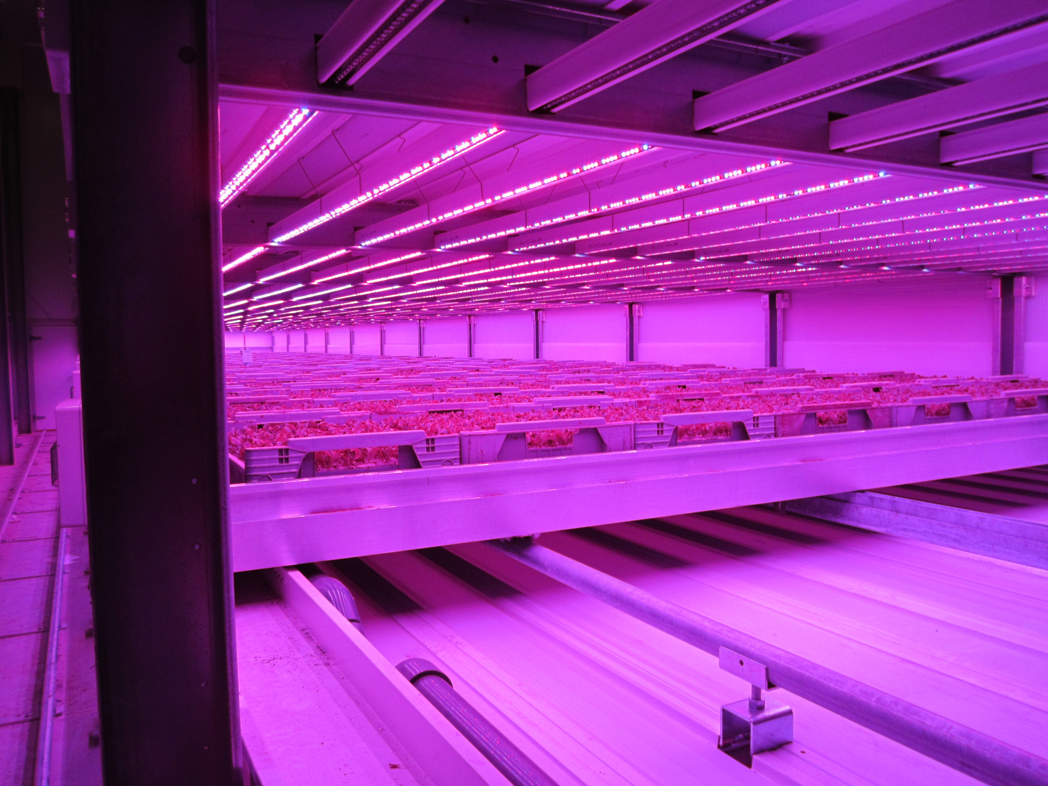 Vertical Farming to Expand Your Greenhouse Crop Size
