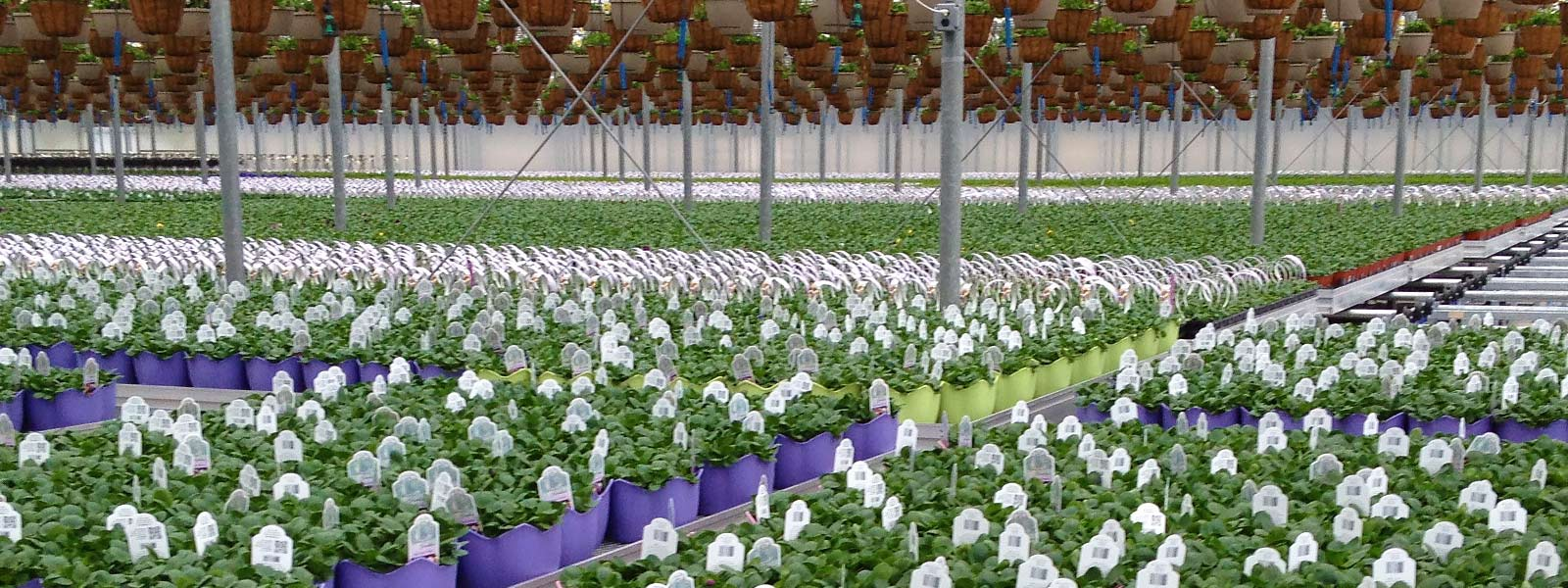 Tava Systems Greenhouse Automation in Niagara, Ontario