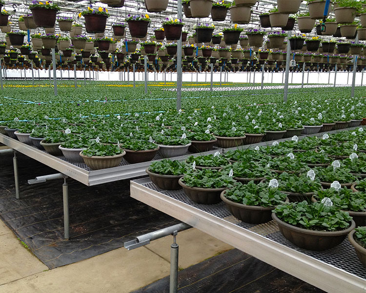 TAVA Systems - Greenhouse Automation - Table Systems