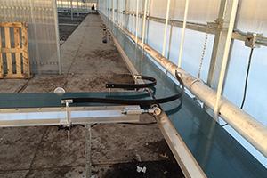 Conveyor Systems, Greenhouse Automation for Canadian Growers
