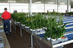 Plant Delivery, Greenhouse Automation in Canada & USA