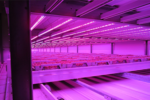 Vertical Farming, Greenhouse Automation & Expansion